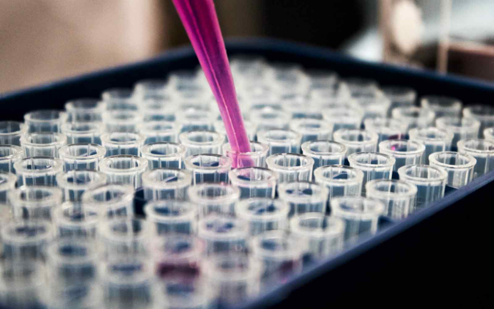 Laboratory test tubes being filled by pipette