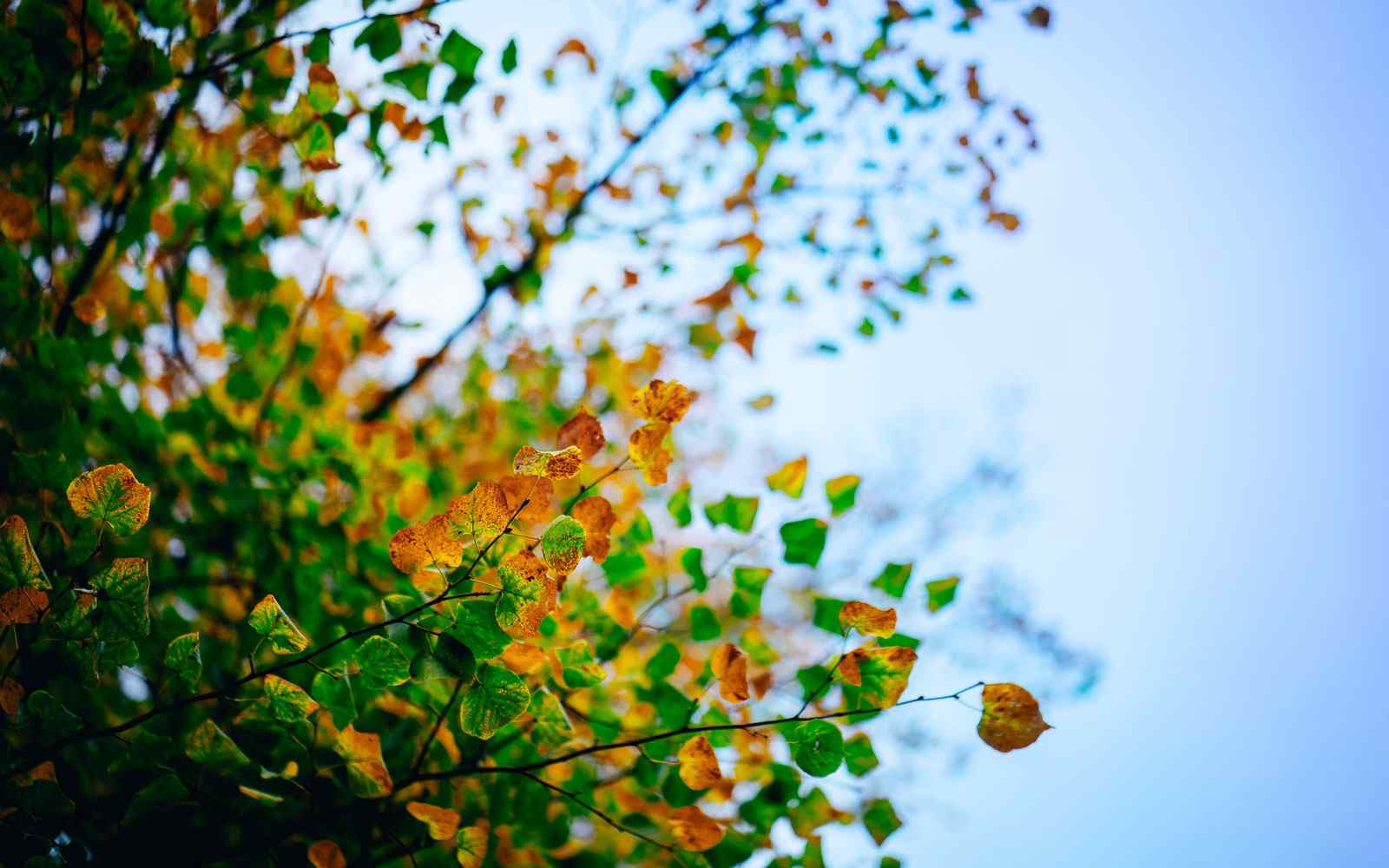 Tree on campus