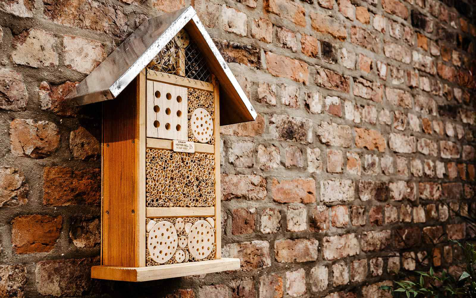 A wooden insect house fixed to a campus wall