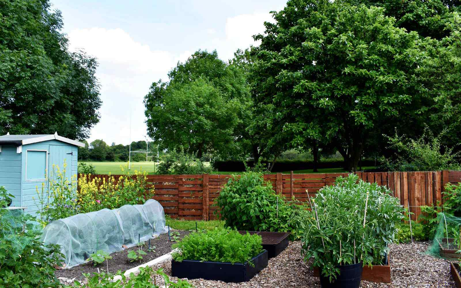 Plots at the York St John allotment site, growing a variety of plants