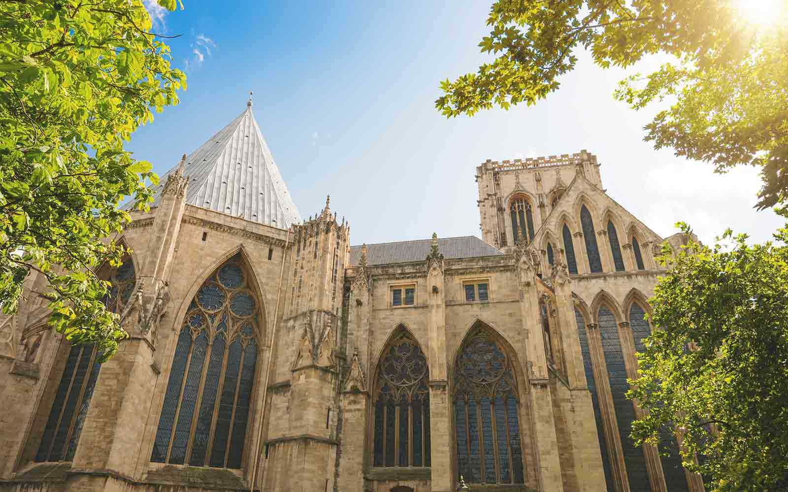 Looking up at York Minster and trees