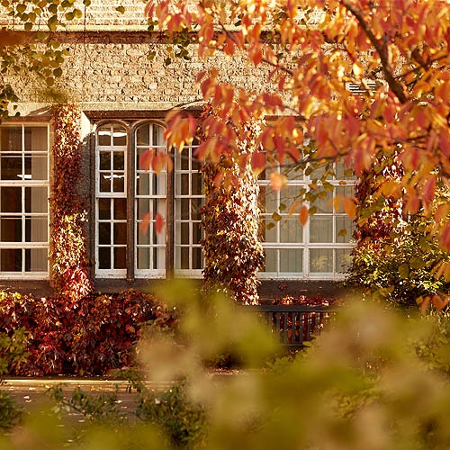 Red and orange leaves over campus buildings