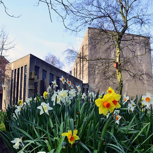 Daffodils of various shades of yellow growing outside the campus chapel