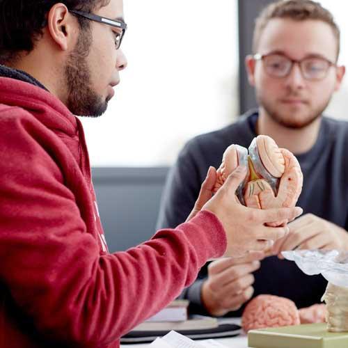 Linguistics students looking at model of human head